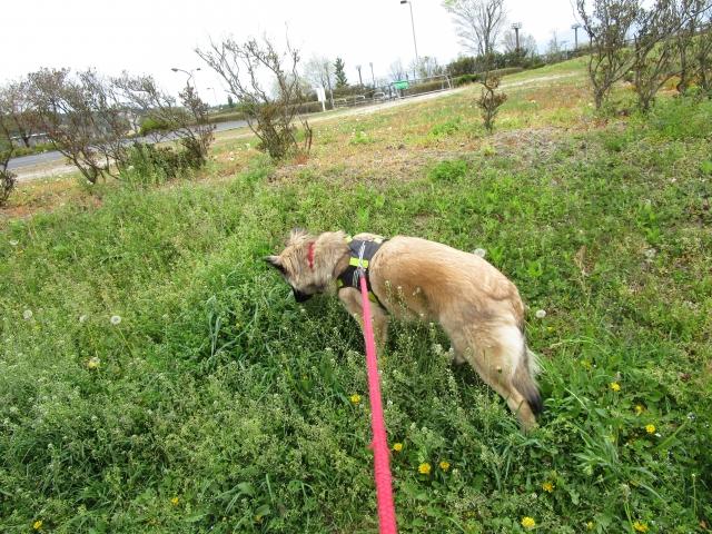 草むらに入る犬
